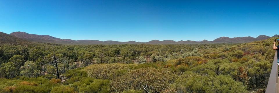 Das Outback und die Fliegen